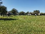 Family Kickball Tournament Photo Thumbail